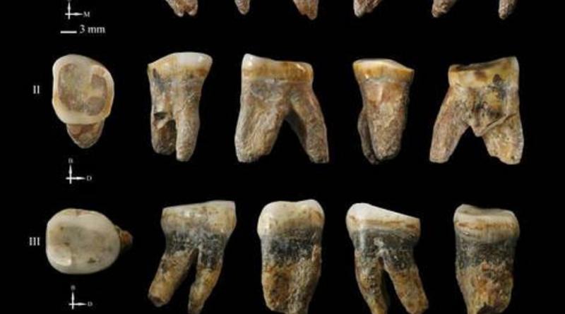 Homínidos con rasgos dentales comunes